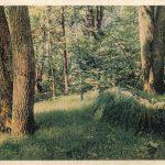 Ясная Поляна. Могила Л.Н.Толстого 150x150 - Пейзажи