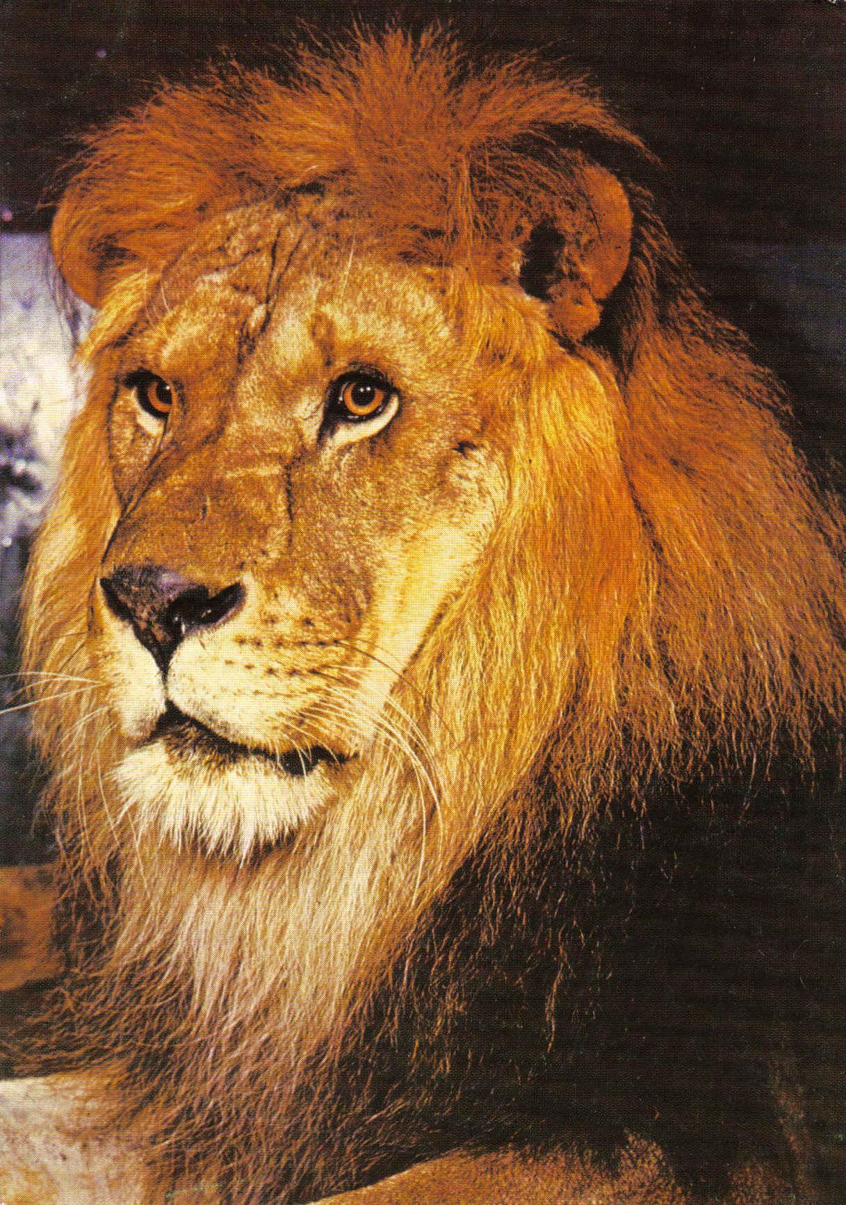 Львов поздравления 63
